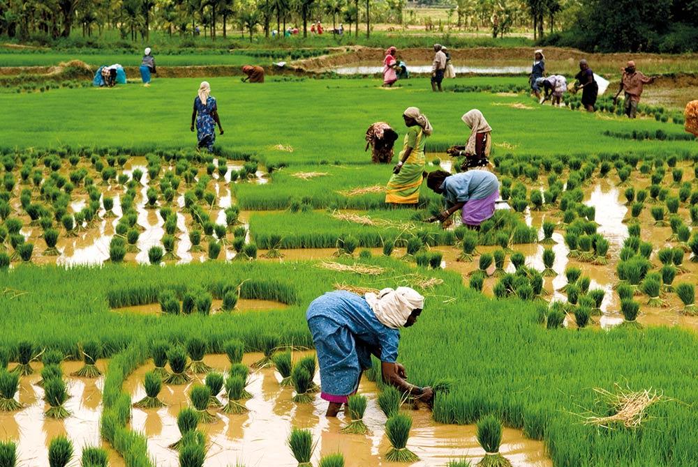 5 technologies that can transform smallholder farmers' lives