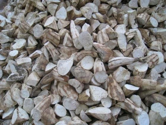 Exporting Cassava chips