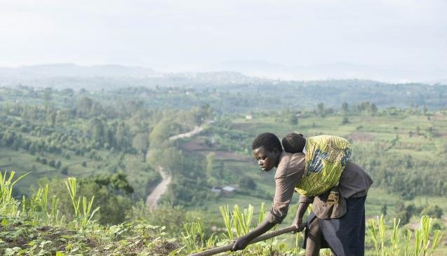 Anchor Borrowers Scheme: 16,000 farmers to participate in Bauchi