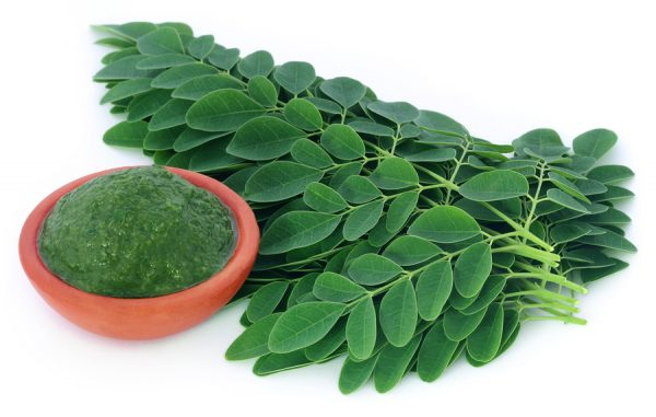 Close up of moringa leaves over white background