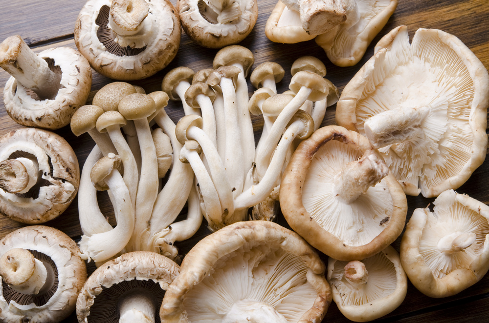 How To Grow Edible Mushroom In Commercial Quantity