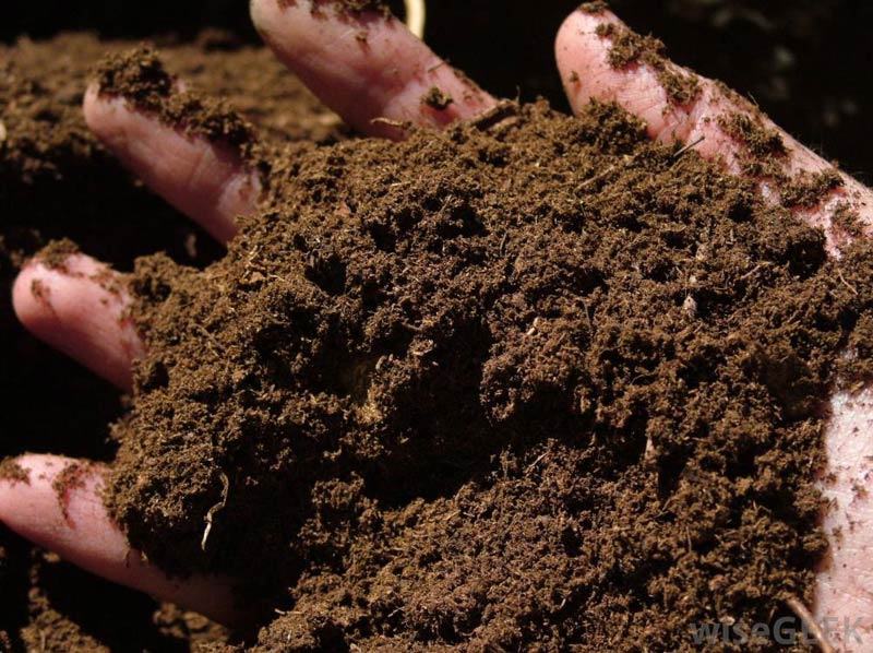 Starting an Organic Fertilizer Production Company
