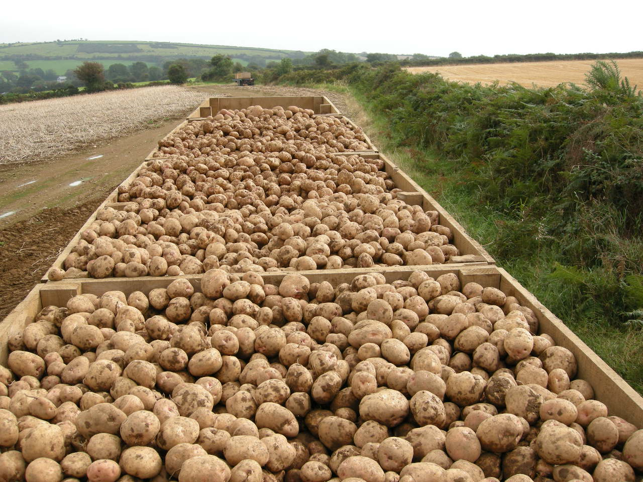 Leverage the FG Irish potato farming loan at 1% interest rate in plateau state