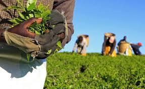 8 Basic Guides To Farming