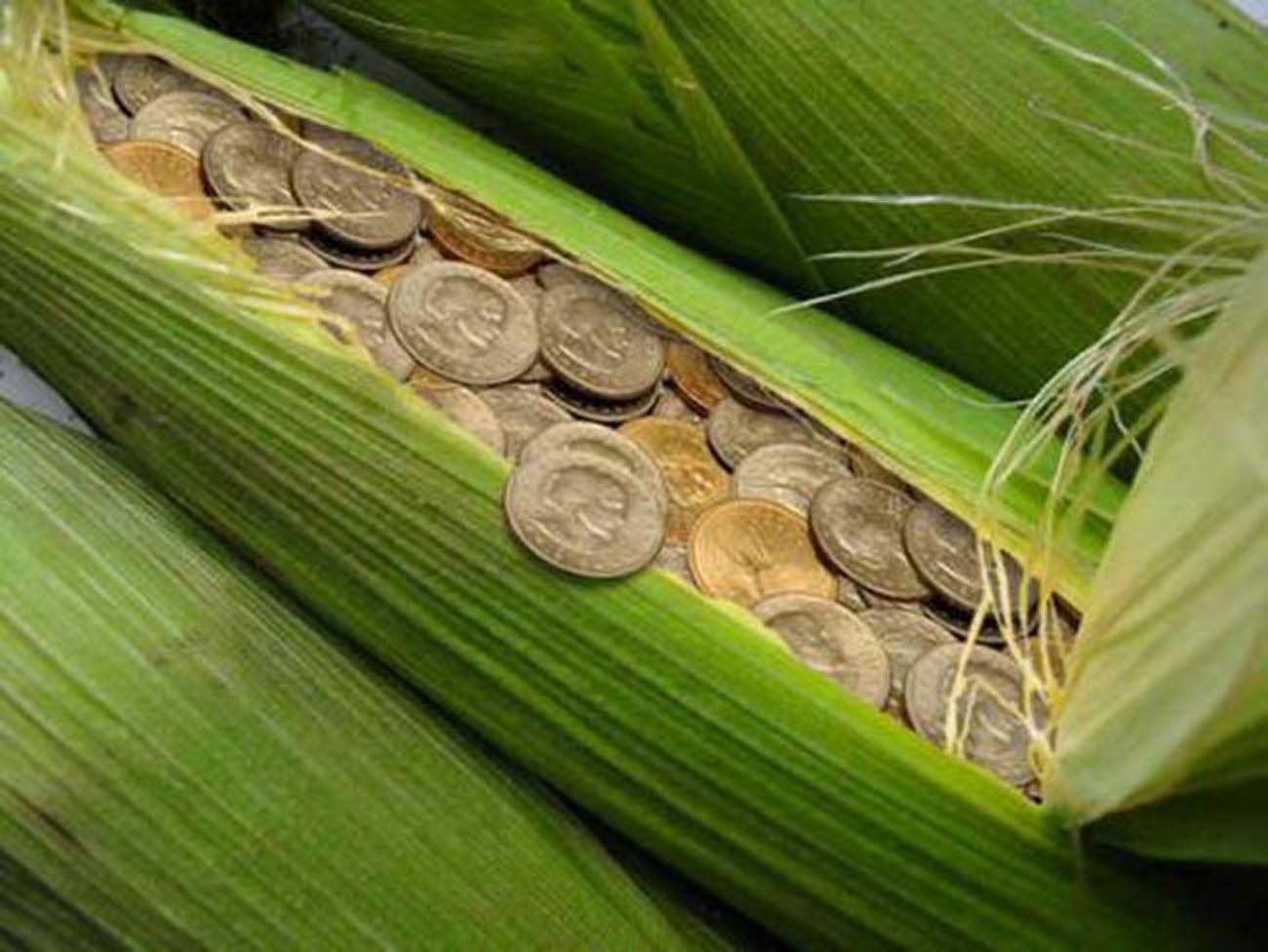 Step by step guide to investing in agriculture