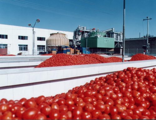 Dangote Tomato Processing Plant Shutdown Over Failure Of Farmers To Supply Tomatoes