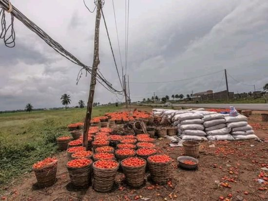 Border Closure: Benin Republic Farmers Count Losses As Rotten Tomatoes Line Roads