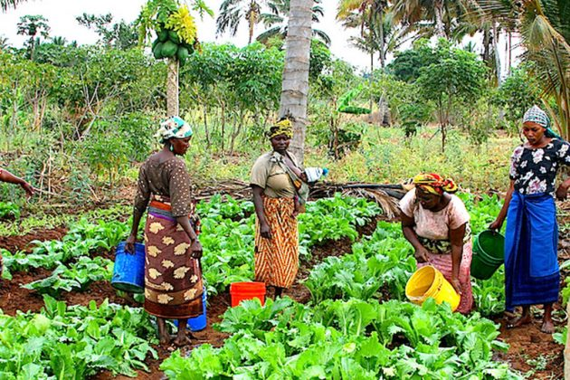 FG Launches 'National Gender Policy On Agriculture'