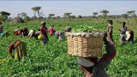 Farmers Seek Exclusion Of 'Political Farmers' From CBN's Zero-Interest Loan Scheme