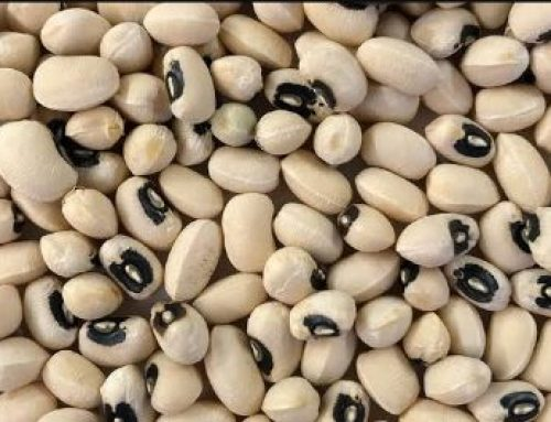 How COVID-19 Slowed The Release Of Pod Borer Resistant (PBR) Cowpea