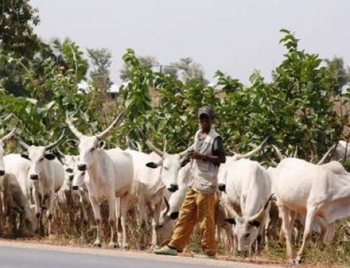 Fulani Herdsmen Storm Ekiti Forest Reserve, Destroy Multi-million Naira Maize Farm