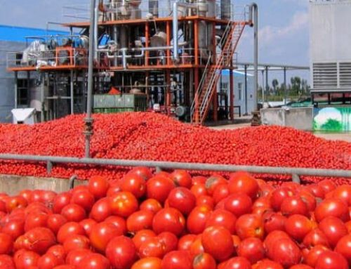 GBfoods Completes N20Bn Tomato Processing Plant In Kebbi