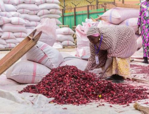 Unlocking The Potentials Of Hibiscus Farming, Exportation